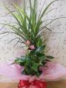 観葉寄せ植え鉢
