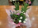 ☆春の花鉢バスケット詰め合わせ