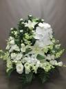 白い菊と白い胡蝶蘭と。