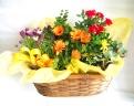 季節の花鉢アレンジ☆おまかせタイプ