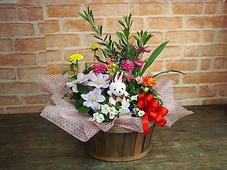 可愛いお花たくさんの寄せ花鉢アレンジ