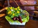 多肉植物と季節の花鉢の寄せ鉢ギフト