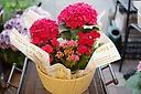 お母さんも中喜びカワイイ寄せカゴ(^^♪その2赤ピンク