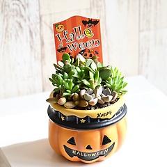 **ハロウィンかぼちゃ 多肉植物寄せ植え**