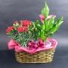 【母の日】 カラーとカーネーションの花鉢