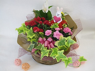【母の日期間限定】ドレスウサギの寄せ鉢ギフト