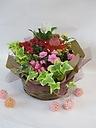 【母の日期間限定】ドレスワンコの寄せ鉢ギフト