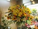 Sun Flower Stand 20.0