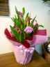 大人気!!ピンクカラーの鉢植え