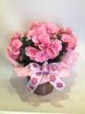 バラ咲きベコニアバスケットピンク