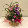 毎年咲く花の寄せ鉢バスケット