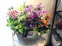 季節の花5種の寄せ鉢 ブリキ鉢カバー付き