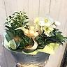 クリスマスローズと蘭と球根植物のブリキ缶寄せ鉢