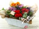 【母の日花鉢】パレットガーデン