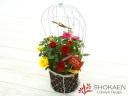 【母の日花鉢】ローズバルーン(PRY)鳥かご風