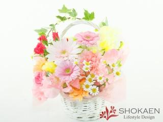 【アレンジ529】シェーナ(LP)