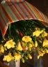 春の香りをのせたフリージャの花束