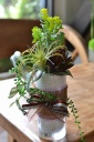 【造花のアレンジメント】 多肉植物ラウンドベース