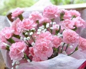 【花束】 ピンクカーネーションの花束