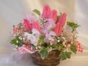 春爛漫♪゜・*:.。. .。.:*・♪