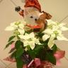 メリークリスマス★プリンセチア