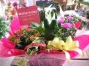 母の日 トピアリー入り花鉢セット