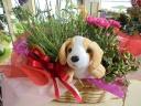 ワンワン好きなママに贈る お花セット