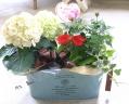 母の日限定 花鉢セットと珈琲