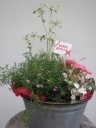 ブリキバスケットの外に植えれるガーデニングの寄せ鉢