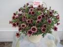 不思議な花色カリブラコアスーパーベル