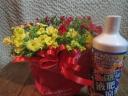 ガーデニングのお花カリブラコアカーニバル&液体肥料
