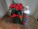 赤カーネーション&花の液体肥料