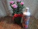 ピンク系カーネーション&花の液体肥料