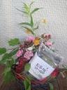 チョコバラのアレンジ&御茶畑ロールケーキ