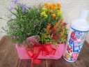 ガーデング好きなお母さんへ季節の花&液肥