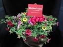ガーデニングの花カリブラコアカーニバル布バスケット