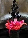 葉も花も黒 ブラックカラ-バスケット付き