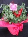 花より食べれるトマト フルティカ