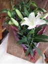 ユリの女王 カサブランカ花束