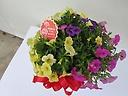 ガーデニングの花カリブラコアバスケット付き