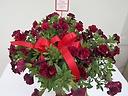 ガーデニングの花八重咲き赤カリブラコアバスケット