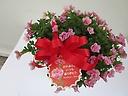 ガーデニングの花ピンク八重カリブラコアバスケット