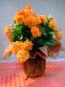 ベゴニアの花鉢