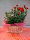 カーネーションとミニバラの寄鉢