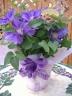 クレマチス 紫(H・Fヤング)