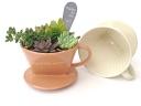 多肉植物寄せ植え ドリッパー 陶器鉢入