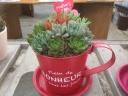 多肉植物寄せ植え 母の日用ブリキカップ容器入
