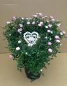 つるバラ鉢植え ハート仕立て ハートピック付