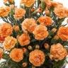 カーネーション鉢植え オレンジ 5号 カゴ付