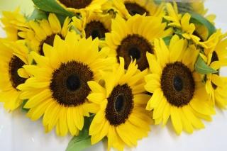 ヒマワリの花束10本